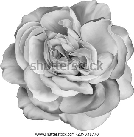 Black and white Rose Flower isolated on white background. Vector illustration - stock vector