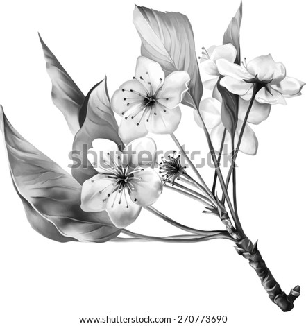 Black and white Saccura cherry tree blossom with green leaves on a branch, vector illustration isolated on white background - stock vector