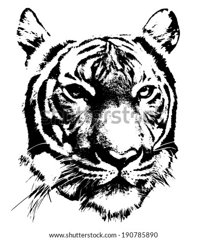 black and white silhouette of a tiger's face - stock vector