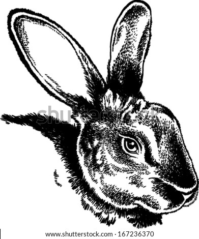 Black and white rabbit outline