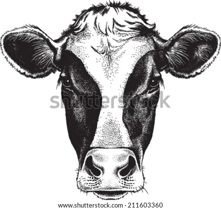 Black and white sketch of a friesian cow's face. Vector portrait. - stock vector