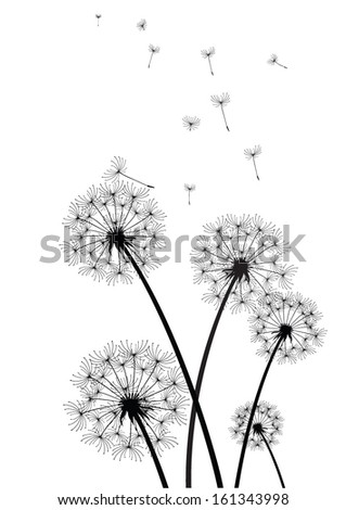 black and white vector dandelions - stock vector