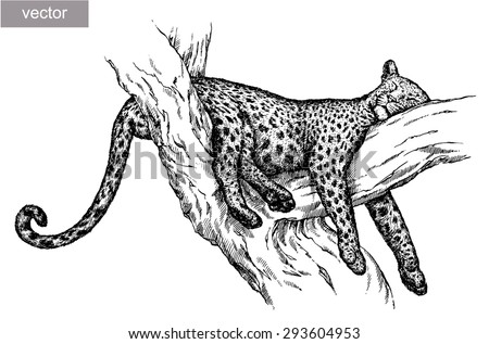 Black And White Vector Engrave Isolated Leopard Rest On Tree