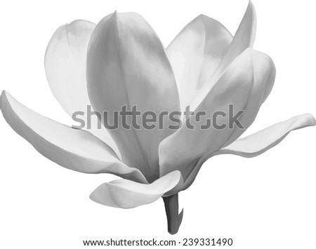 Black and white Vector Illustration of a magnolia flower isolated on white background - stock vector
