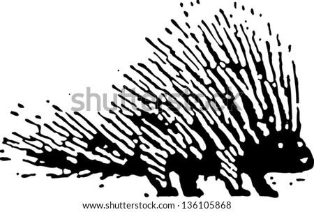 Black and white vector illustration of a porcupine - stock vector
