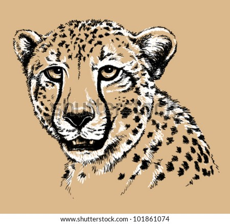 stock-vector-black-and-white-vector-line-drawing-of-a-cheetah-s-face    Baby Cheetah Clipart Black And White
