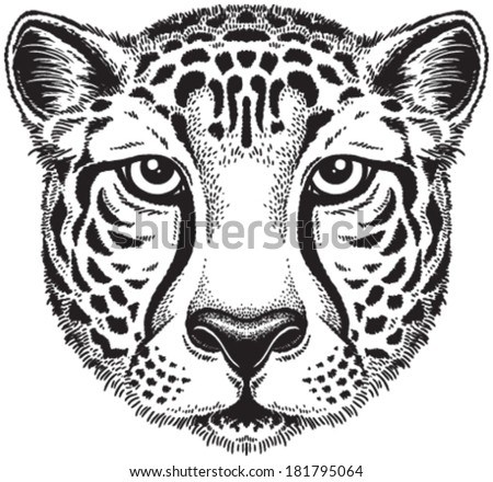 Cheetah Isolated Stock Photos Images Amp Pictures