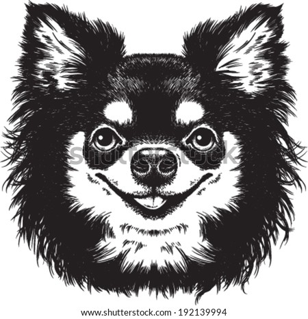 Black and white vector sketch of a cute long haired Chihuahua's face - stock vector
