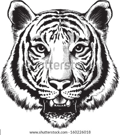Angry tiger drawing of a tiger s face stock