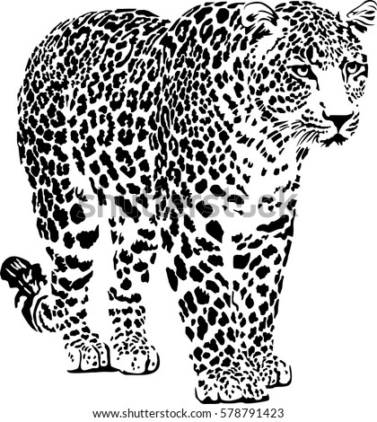 Black and white vector sketch of walks jaguar