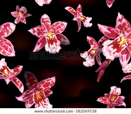Black background of blooming Beallara orchids flowers. Vector illustration