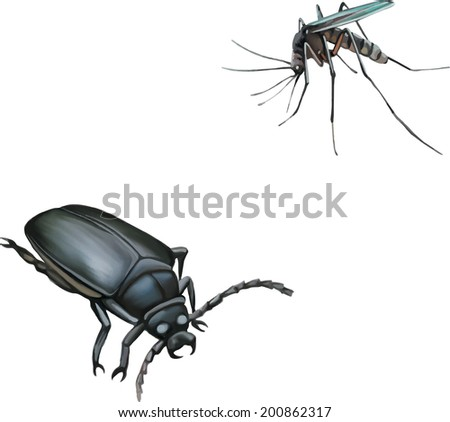 black beetle, Mosquito isolated on white. Vector illustration