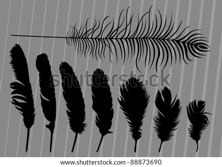 Black bird feathers illustration collection background - stock vector