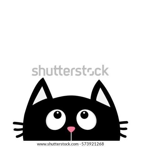 himalayan cat white