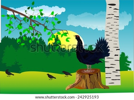 black cock bird in forest illustration