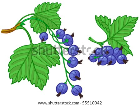 Black currant with green leaves - stock vector