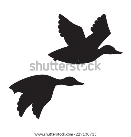 flying ducks stock images royalty free images vectors