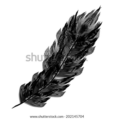Black feather icon on white background. Vector illustration. - stock vector