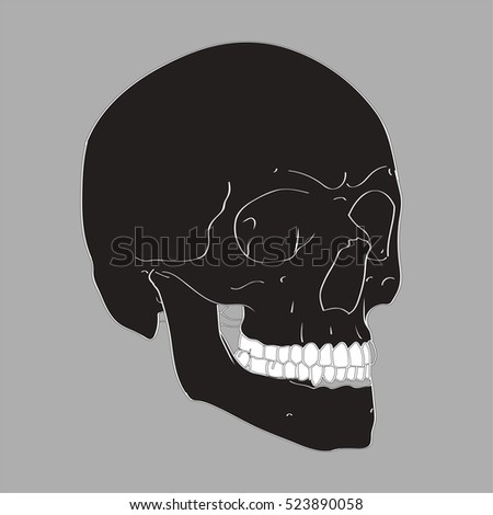 Black Hand Drawn Vector Skull on a gray background. Human Skull Vector Illustration for medical, Halloween or tattoo design.