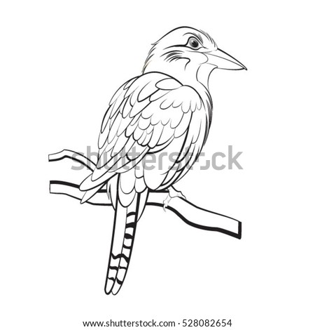 Colouring Pages Kookaburra : Kookaburra cartoon stock images royalty free & vectors