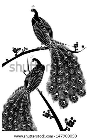 black peacock - stock vector