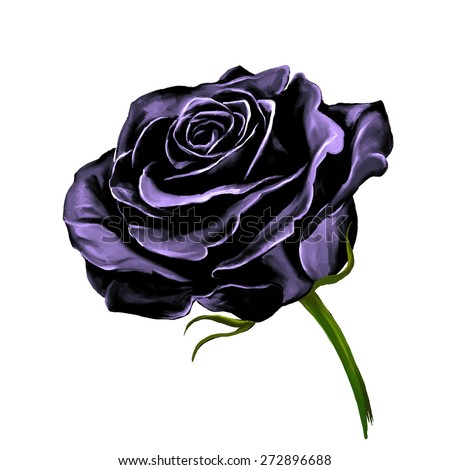 black rose vector illustration  hand drawn  painted watercolor  - stock vector