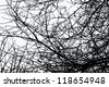 black tree branches - stock vector