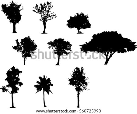 Black tree Vector,Black tree silhouettes on white background,silhouette of trees,Tree Branch,Silhouettes,tree on white background,Vector trees in silhouettes