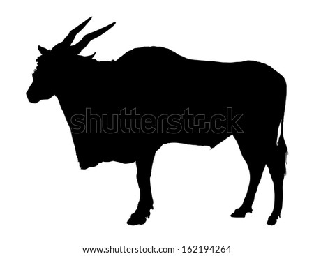 Black vector silhouette of Eland antelope standing,isolated on white background.