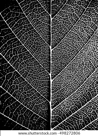 Black White Closeup Leaf Texture Natural Stylish Background Nature Vector Illustration