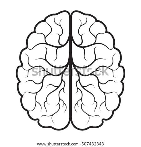 brain drawing stock images royaltyfree images amp vectors