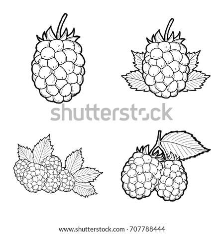 Set Raspberry Icons Isolated On White Stock Vector ...