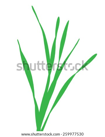 blade of fresh grass vector