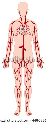 lymphatic system unlabeled diagram stock illustration. Black Bedroom Furniture Sets. Home Design Ideas
