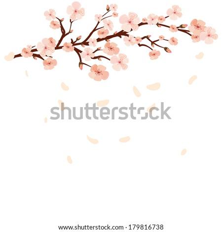 blooming branch spring sakura flowers - stock vector