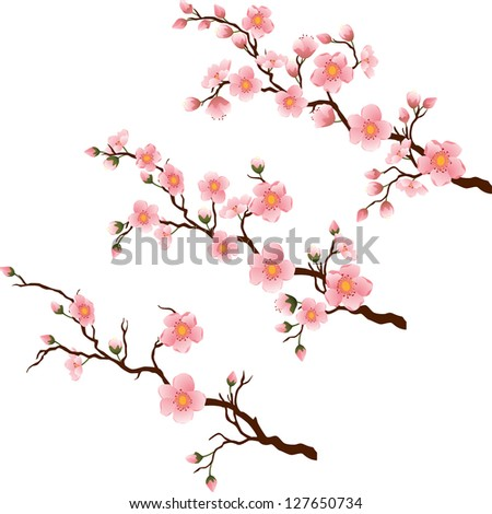 Blooming Cherry branches in 3 different stages. Vector