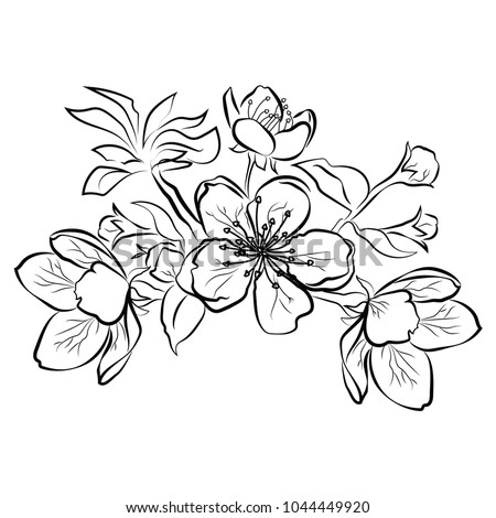 Blooming cherry sakura branch flower buds stock vector 1044449920 sakura branch with flower buds black and white drawing of a blossoming mightylinksfo