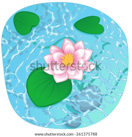 blooming lotus with pink petals on clear shining water - stock vector