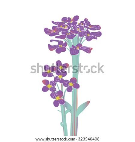 Blooming purple Alyssum flowers - stock vector