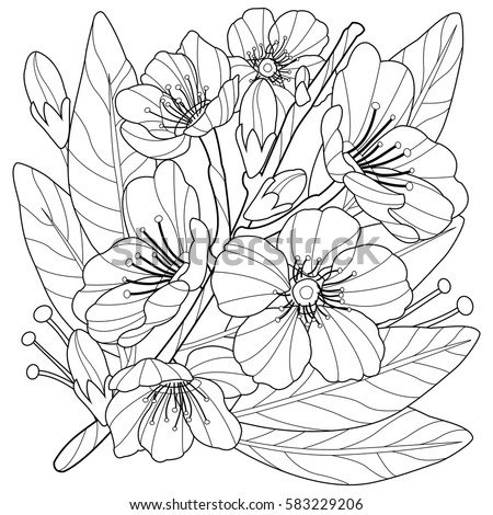 Blossoming Almond Tree Branch Flowers Coloring Stock Vector ...
