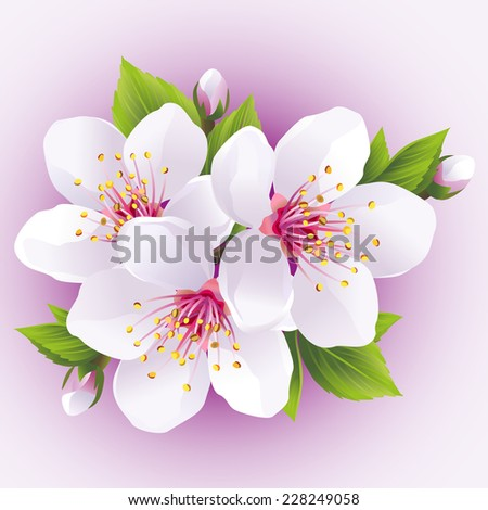 Blossoming sakura branch- japanese cherry tree. Beautiful pink cherry blossom, isolated on purple background. Stylish floral wallpaper. Vector illustration - stock vector