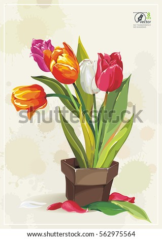 Tulip Background Stock Images Royalty Free Amp Vectors Shutterstock