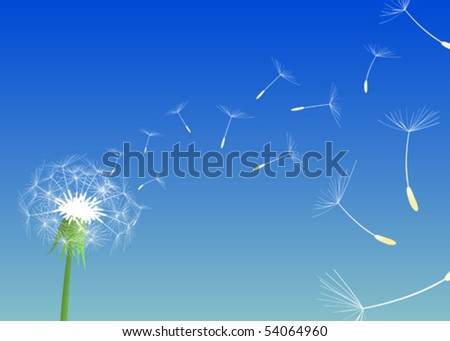 Blow Dandelion. A light breeze shook dandelions