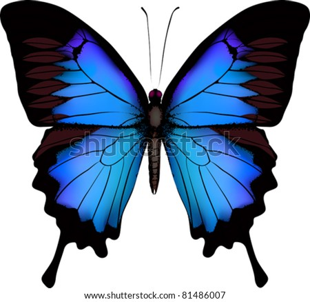 Blue butterfly papilio ulysses (Mountain Swallowtail) isolated vector on white background - stock vector
