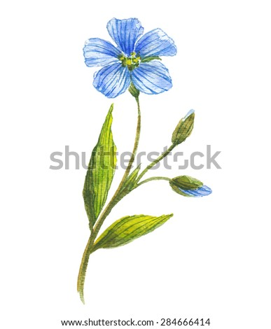Blue flower of flax . Wild flowers. Watercolor floral illustration.