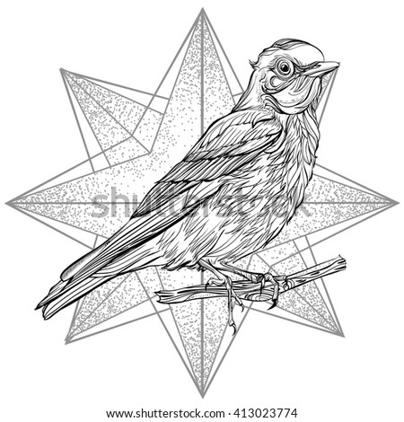 Blue Sialia. Vector illustration isolated on white background. Detailed drawing of a bird - stock vector