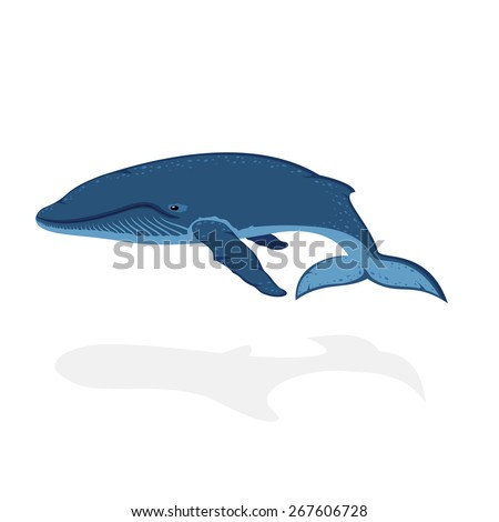 Blue whale isolated on white background, illustration. - stock vector