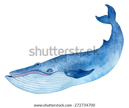 blue whale - watercolor hand drawing vector paint  - stock vector