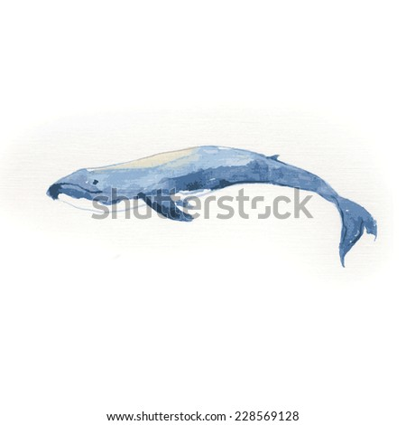 Blue whale. Watercolor vector illustration. - stock vector