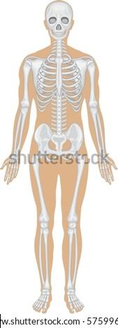 Body system - stock vector